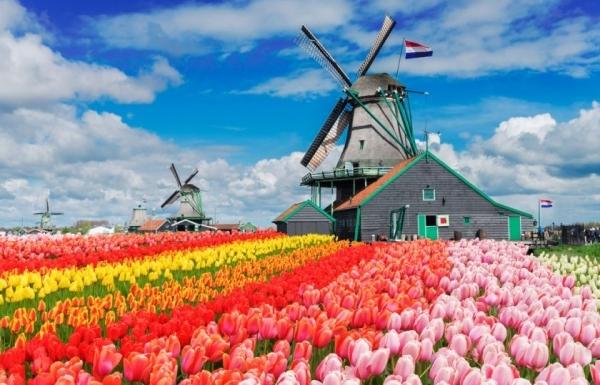 Spolupráce s holandskou školou pokračuje