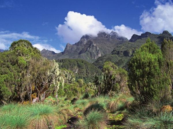 Absolvent z roku 1993 Petr Hejduk zdolal nejvyšší vrchol pohoří Ruwenzori Mount Stanley (Margharita) 5109 m