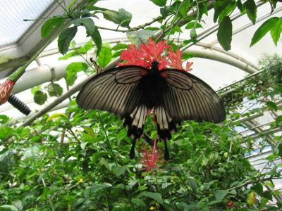 Líhnutí motýlů v tropickém skleníku Fata Morgana