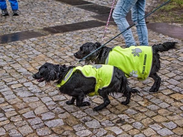 5.ročník charitativního Běhu pro broumovský psí útulek