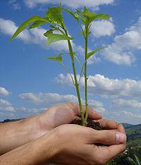 Ekologická stopa - akce oktávy a 4.A