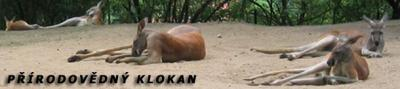 Bigas a Lorencová na 2.místě v kraji - Přírodovědný klokan